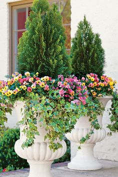 Pair colorful annuals with an evergreen for an established planting that can still change from season to season.