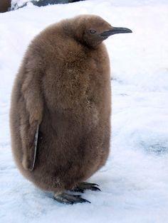 Funny Animals, Cute Animals, Animal Antics, Penguins, Birds, Joy, Animales, Pretty Animals, Cutest Animals