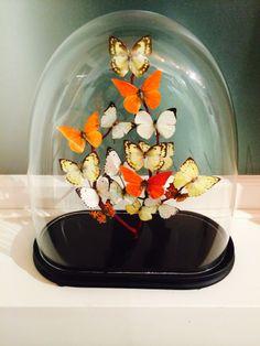 Colour butterflies