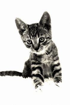 Modern Kitten Cat Photography  . . . #cat #cats #ModernPets #ModernPetLiving #CatLove #ModernCats