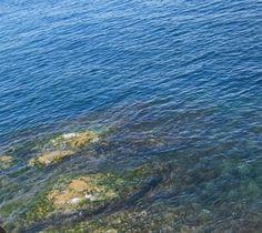 Identifican 'desiertos' de vitaminas en el océano | El Blincacequias
