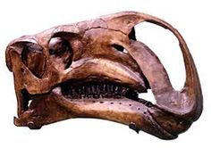 """Name:  Altirhinus (Greek for """"high nose""""); pronounced AL-tih-RYE-nuss  Habitat:  Woodlands of Central Asia  Historical Period:  Middle Cretaceous (125-100 million years ago)  Size and Weight:  About 26 feet long and 2-3 tons  Diet:  Plants  Distinguishing Characteristics:  Long, stiff tail; strange crest on snout"""