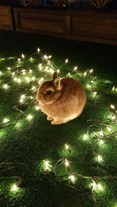 Great chance to remind everyone that bunnies LOVE electrical wires. Keep them safe from harm this Christmas and everyday.