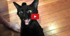 If A Black Cat Crosses Your Path…..