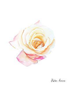 Helen Simms rose website