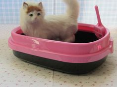 Cat Toilet – Accessories & Products for Cats