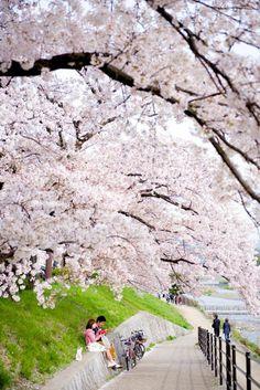 The wonderful sights of Japan Japanese Architecture, Beautiful Architecture, Art And Architecture, Kyoto, Japan Sakura, Japan Japan, Japan Travel Tips, Travel Guide, Japanese Style House