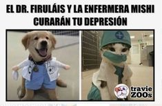 Memes 2 - Momos - Continuation of memes, for lack of space Here you will find more memes the first pa - Funny Spanish Memes, Funny Memes, Pinterest Memes, Book Memes, New Memes, Wattpad, Funny Cat Videos, Cute Baby Animals, I Love Dogs