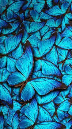 Essas borboletas lenbra que filme ??   ( Comenta aí ) #Brasil
