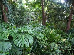 El Jardin Tropical