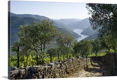 Portugal, Vila Real, Douro, Tras-os-Montes e Alto Douro, The Douro valley