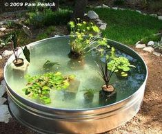 made fish pond filter How to make a container pond in a stock tank Digging Outdoor Fish Ponds, Indoor Pond, Ponds Backyard, Garden Ponds, Outdoor Fish Tank, Koi Ponds, Herb Garden, Container Pond, Container Water Gardens