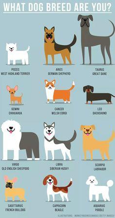 dog zodiac signs fun facts * dog zodiac signs ` dog zodiac signs astrology ` dog zodiac signs fun facts ` dog zodiac signs truths ` dog zodiac signs tattoo ` zodiac signs dog breeds ` zodiac signs as dog memes ` chinese zodiac signs dog Zodiac Signs Animals, Zodiac Signs Chart, Zodiac Sign Traits, Zodiac Signs Sagittarius, Zodiac Star Signs, Astrology Zodiac, Gemini, Aquarius Horoscope, Dog Zodiac