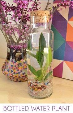 Easy Water Terrarium – Bottled Water Plants: A water terrarium is a simple and confined little ecosystem that is very pretty to look at and brings some natural grace to your home decor! via @Alison McCaffrey: