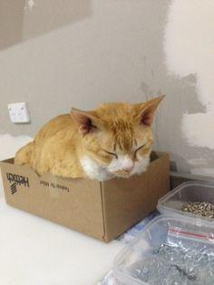 Found a box, time to sleep. (Horatio Bradshaw Roadworks - aka Roadworks)