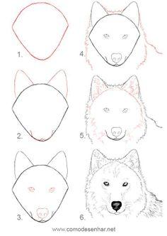 dessiner un loup
