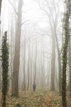 joshuabrathwaite:The Woods