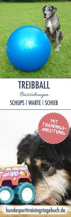 #Treibball-Basis-Übungen – #Spielerisch vom #Stups zum #Schieb