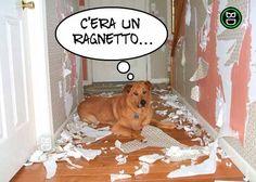 E poi quella carta da parati facevo schifo...!  #bastardidentro #cane #carta #disastro