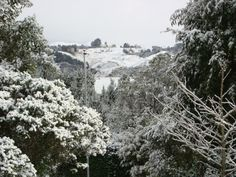 Apiti, #Manawatu, #NZ in #snow. Image taken by Peter and Barbara Sperl of Piazza Verde. #newzealand #thecountryroad #blog