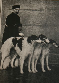 Woronzova Kennel, Tambov region, Russia, early 1900s (Quirk and Quill)
