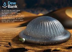 The Dew Bank Bottle mimics a Namibian desert beetle to capture morning dew water in the most arid areas on Earth. Ingenious portable fog water harvesting design.