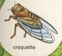 1000 images about lavande cigale on pinterest search - Dessin de cigale ...