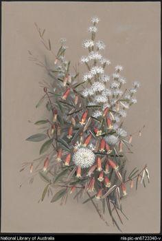Ellis Rowan - eight Rowan, Ellis, Botanical Art, Sketchbooks, Journals, Christmas Wreaths, Images, Illustrations, Holiday Decor