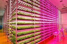 Indoor and Underground Urban Farms Growing in Size and Number
