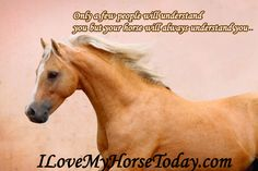 Only a few people will understand you but your ‪#‎horse‬ will always understand you..:)