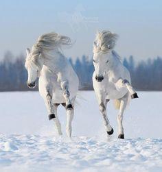 Espectacular imagen de dos caballos al galope por la nieve