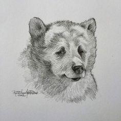 Bill Murray's Baloo from the 2016 Jungle Book; a pencil sketch by Randi Lynn Jackson