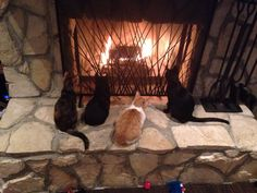 Our four rescue kittens enjoying a fire!