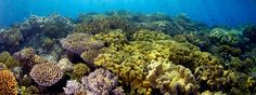 Baltic Sea a big barrier reef © © Troy Mayne Underwater Flowers, Baltic Sea, All Over The World, Troy, Plants, Landscapes, Australia, Big, Paisajes