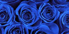 Ingredients Ingredients Top 10 Most Beautiful Blue Roses<br> Roses are one of the most loved variety of flowers ever. Blue roses are among the fairly rare and appreciated kind among them. Here is a list of the most beautiful ones. Types Of Blue Colour, Kind Of Blue, Color Blue, Purple Roses, Blue Flowers, Flora Flowers, Blue Rose Meaning, Blue Roses Wallpaper, Royal Blue Wallpaper