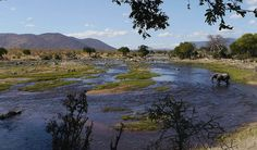 Picture taken on a vehicle safari between Dec-July Ruaha National Park, Tanzania. We were staying at Kwihala Camp.