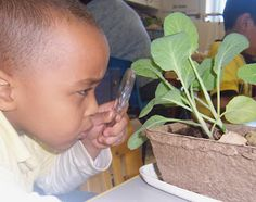 Age Group: 3-5 years  SC.1.41 Use a variety of ―scientific tools (e.g., balance scales, magnifying glasses, measuring cups, food coloring) to investigate the environment and to gather information.  SC.1.52 Observe and describe properties of objects.