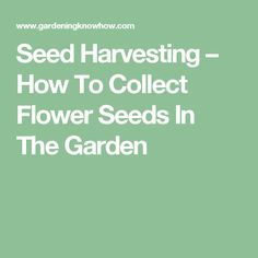 Seed Harvesting – How To Collect Flower Seeds In The Garden