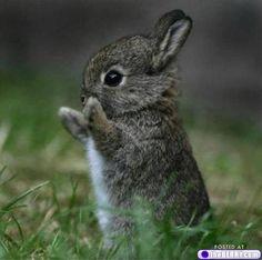cute as a little bunny!