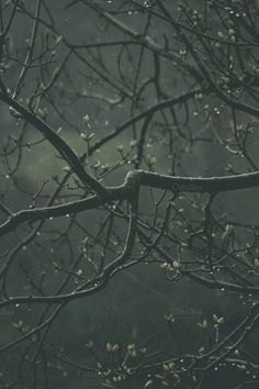 Branches in rain by Neo Ink Design on Creative Market