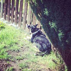 Krystal. Owner: Ferai Robson (Facebook) Krystal, Husky, June, Facebook, Pets, Animals, Animales, Animaux, Animal