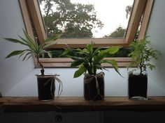 Great way of potting plants: glass jars decorated with a string of rope or raffia