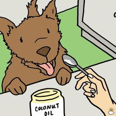 Coconut oil for dog ear infection