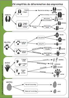 Ciklus-meghatározás-ujjlenyomat-állatok