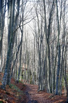 Imagen de un bosque en La Garrotxa (Gerona). Foto: JJ Guillén (EFE)