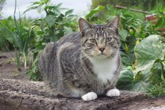 A new treatment for FeLV and FIV has shown some promise in early studies.