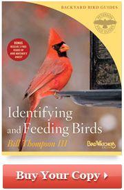 Natural Bird Feeding :: Excerpt from Feeding and Identifying Backyard Birds by Bill Thompson, III :: Bird Feeding :: Bird Watcher's Digest.com