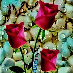 """DesertRose,;,❤ لن ينسى الله خيراً قدمته، ولاهماً فرّجته ولا عيناً كادت أن تبكي فأسعدتها! عش حياتك على مبدأ """"كـن مُحسناً حتى وإن لم تلقى إحساناً، ليس لأجلهم بل لأن الله يحب المحسنين"""" سهل الله لكم الخير والفلاح ورزقكم غاية السعادة والإنشراح.. وغفر لله لكم ولوالديكم وأدخلكم جنات النعيم,;,"""