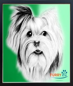 Furry Paw Pics offering great single pet portrait headshot with combination of beautiful color background, perfect for any pet's portrait by our expert artists.