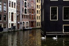 Lou Rouge, Amsterdam Swans